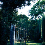 Gate In Garden thumbnail