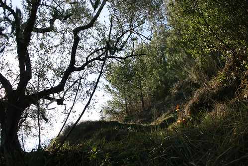 olivier pins