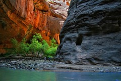 The Narrows (META-BEAST) Tags: trees southwest nature water river landscape sandstone scenery stream desert plateau canyon hike zion hikers navajo canyons narrows coloradoplateau