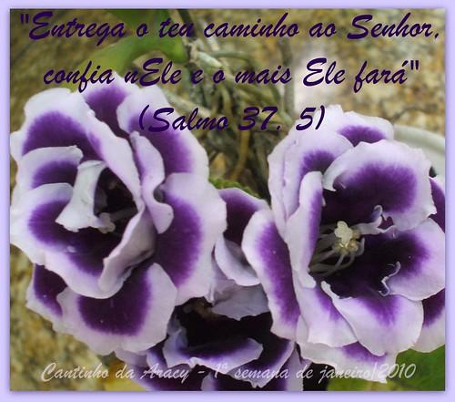 Flores e Salmos- 1ª semana de janeiro by Cantinho da Aracy
