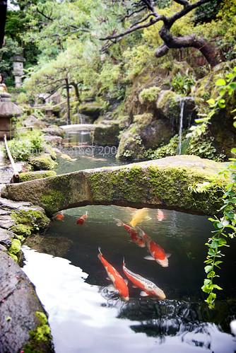 japanese koi garden inspired - photo #45