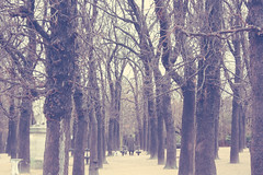 (_acido) Tags: park old trees winter white man paris cold dogs lost soft canoneos450d lookatthephoto