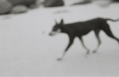 (Fernanda Grigolin) Tags: dog praia perro cachorro portobelo fernandagrigolin