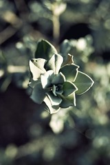 Imperfect Symmetry. (Raquel Malln) Tags: flower nature beautiful up close bokeh free symmetry everything imperfect