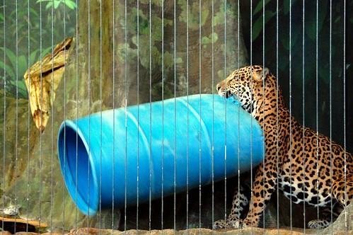 zoo 074