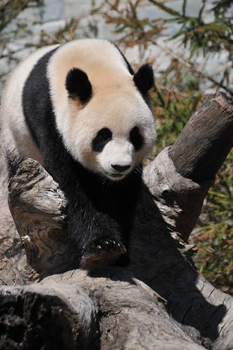 Funi @ Adelaide Zoo