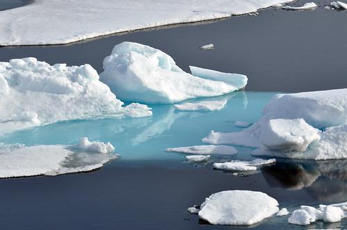 """""""Arctic Ice"""""""
