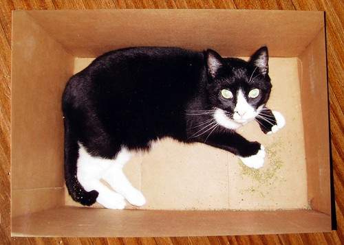 Soda in the catnip box - postcard