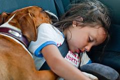 travelling after lunch (ostornol) Tags: chile dog car digital nikon hug sleep boxer
