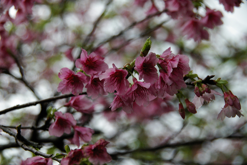 我也要抽獎 之 春節沖繩遊篇