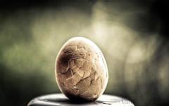 Mysterious Egg (Tallapragada) Tags: creative krishlikesit
