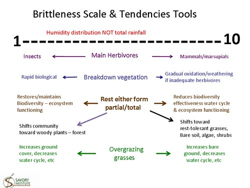 Brittleness Scale and Tendencies Tools