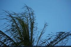 IMG_9588 (Max Hendel) Tags: coconut canoneosdigital photobymaxhendel bymaxhendel fotografadopormaxhendel coconutpalminthenight maxhendel photographedbymaxhendel pormaxhendel canoneosphoto photographermaxhendel
