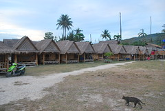 Cat - Gato (CAUT) Tags: trip travel viaje thailand nikon asia seasia southeastasia phiphi tailandia backpacking meow backpacker miau 2010 d60 phiphidon phiphiislands nikond60 sudesteasitico surdeasia islasphiphi