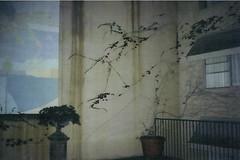 disposable (kate bradford) Tags: old vintage vines disposablecamera