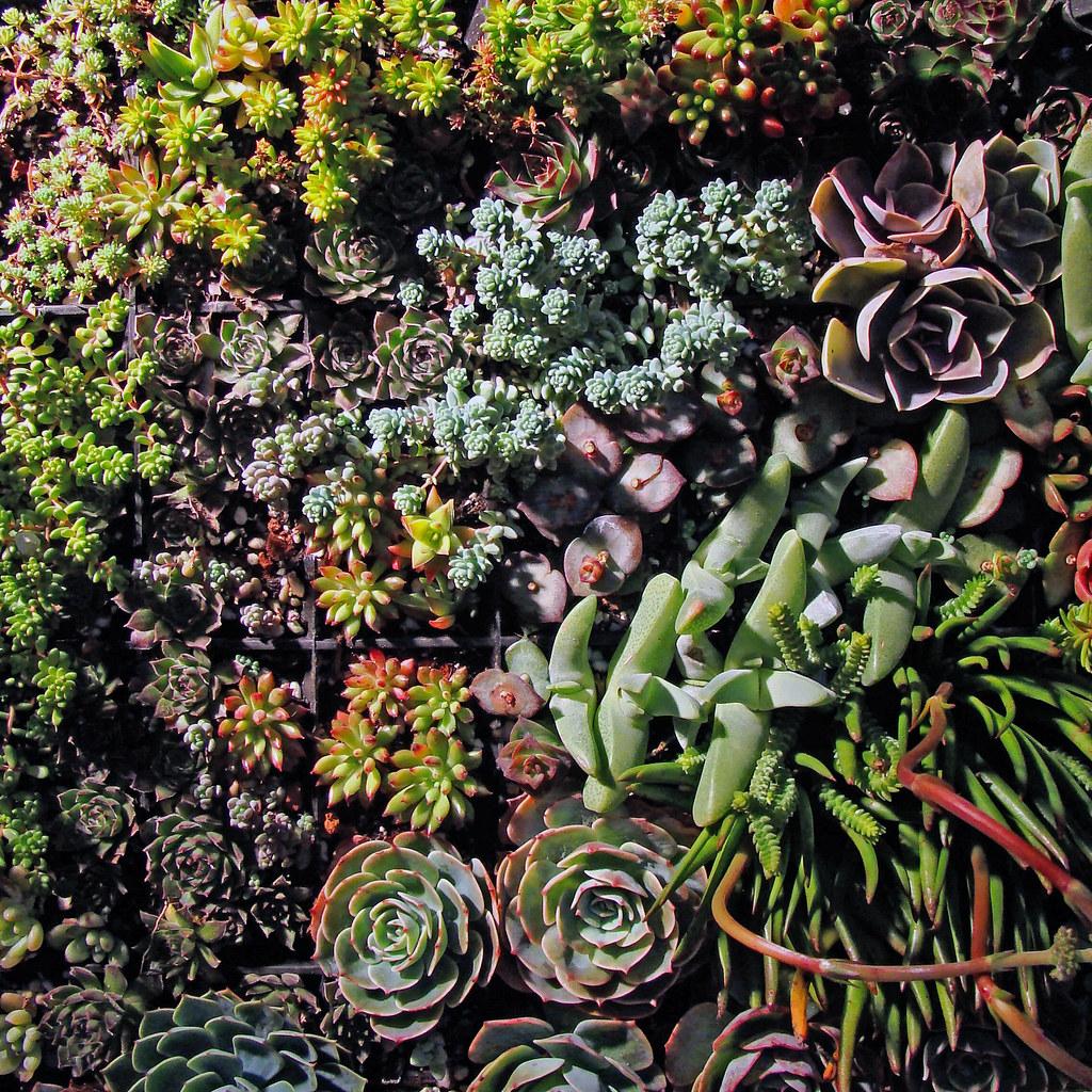 DSC03937 succulent wall