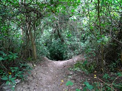 RIMG6008x1000 (Weltbummler) Tags: yerbabuena tucumn bosquenublado nuboselva