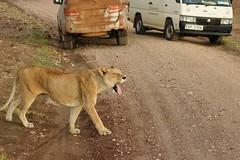 Amboseli (Kenya) (Vecaks.narod.ru) Tags: africa kenya east amboseli kilimandzaro