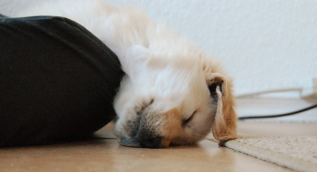 Upside down dog sleeps...upside down