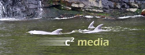 Dolphin Pod, Milford Sound