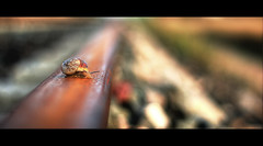 Caracol en la via (Deivysv) Tags: david eos 50mm bokeh snail rail railway via explore desenfoque caracol carril 1000d eos1000d deivysv