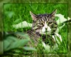 """""""Mom, your harshing my Mellow!! Trying to catch a chipmunk here... """" (texym11-in and out :)) Tags: tre tomcat threelegcat tabby rescued nature loved katzen gato fiv familypet color chat catmoments cat cannon adopted may 2011 friendsofzeusphoebe"""