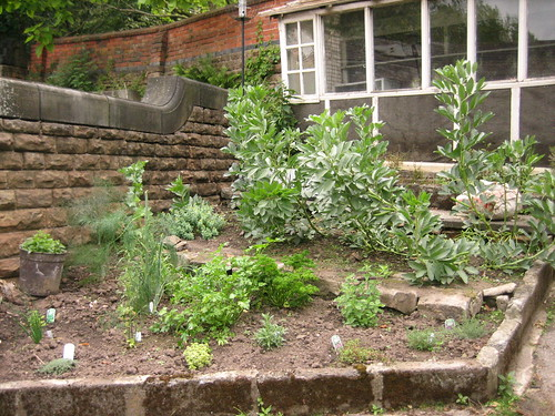 herbs and broadbeans