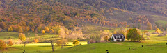 Burkes Garden-5362 (esprcorn) Tags: fall burkesgarden flickrchallengegroup flickrchallengewinner
