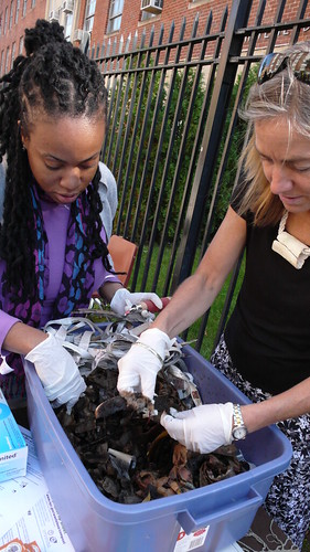 Brooklyn Compost Project - Worm Compost
