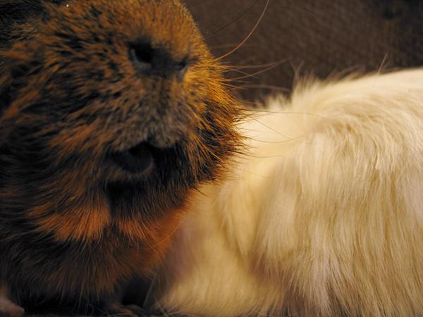 Kuzco and Alfie