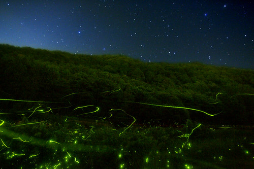 Firefly and Star