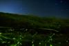 Firefly and Star (masahiro miyasaka) Tags: japan night insect stars star flying astrophotography fluorescence firefly fireflies glowfly