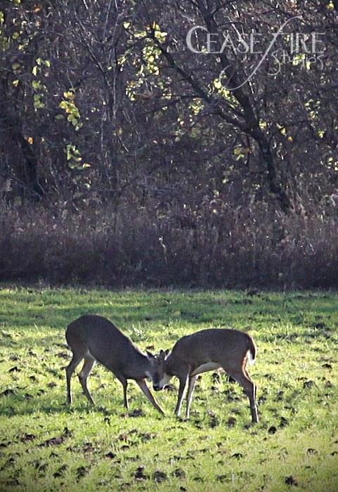 11-01-deer4