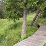Oderteich boardwalk #1 thumbnail