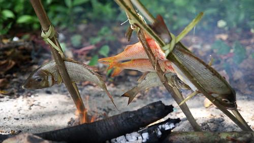 Grillowane ryby