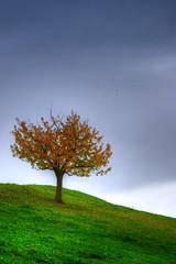 Swiss Autumn (simply Mo) Tags: laub herbst himmel wolken gras bltter baum regen regenwolken bewlkt
