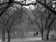 Canopy of trees in B/W........ (ninariver) Tags: trees blackandwhite nature leaves rain weather river gray bamboo riverbank mybackyard pecantrees blackwhitephotos southconchoriver ninariver