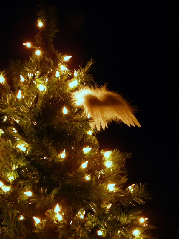 Wings On A Tree