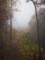 201_1474 (yellerhammer) Tags: trees mountains fog great smokey smokies
