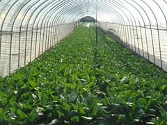 greenhouse interior (Samm Bennett) Tags: plant japan tokyo greenhouse kiyose