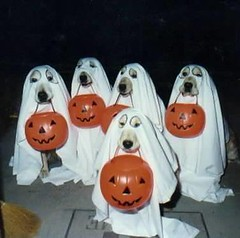dogs in halooween  by Thamires-
