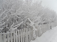 (NO) Winter in Hamar (sun7ss) Tags: schnee winter snow cold beautiful norway norge vinter frost cloudy w norwegen places na kalt zima idyllic 2010 landskap norsk landskab winther schn mroz bewlkt norwegia snieg koldt zimno sniegu bardzo dworze pochmurno sun7ss duzo norwegii silny idyllisk noorvegen coldt mrozno beskyet sun6ss