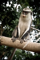 IMG_1943 (same_photography) Tags: travel portrait people blackandwhite bw nature canon photography monkey photo dance village image culture lifestyle tribal ancestor ghana jungle abroad westafrica editorial ritual goldcoast palmwine tafiatome obruni bebini sameubank liatiwote palmgin
