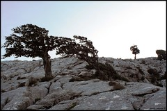 l'opera di eolo (Daniele Maccioni) Tags: sardegna trip trees sky mountain alberi trekking canon 350d sardinia wind natura monte montagna vento cima barbagia nuoro oliena scielo