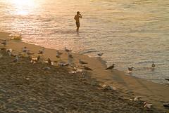 Estoy en las Piraguas!!! (TerePedro) Tags: espaa spain agua movil asturias playa basura plastico gaviota sella piraguas ribadesella cantabrico botellas descensodelsella aboutiberia mygearandme
