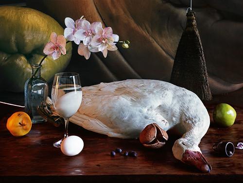 White Goose_Omaha 2009_copyright Vera Mercer