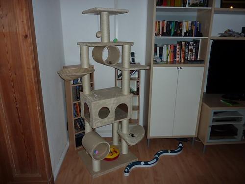 Kratzbaum und Spielzeug