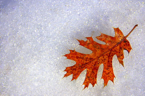 Seasons by *~Dawn~*, on Flickr