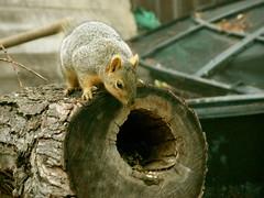 Squirrel Hole (boisebluebird) Tags: boise boisebluebirdcom httpwwwboisebluebirdcom boiselandscaping boisegardener