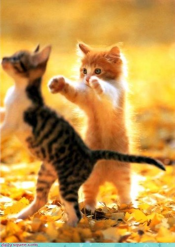 Sunlit cute kittens walking on hindlegs like zombies
